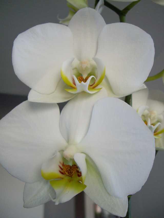 orchidelamaison.jpg